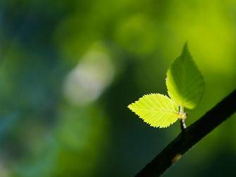 tree-green-leaf