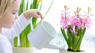 Tipps zur Pflege Ihrer Zimmerpflanzen