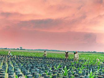Kleinbauern sollen dazu befähigt werden, ihre Produktivität zu steigern