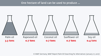 One hectare palm oil 2