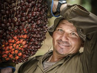 Palm oil farmer
