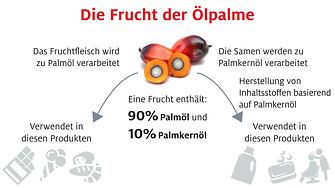 Infografik: Die Frucht der Ölpalme